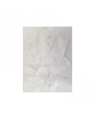 100 Petalos Color Blanco
